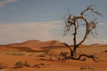 arbre mort désert